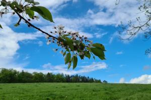Blühte im Mai