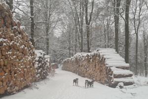 Schnee bei Steinbach