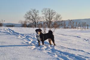 Jocy im Schnee