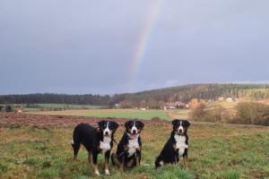 Regenbogen Weißendiez