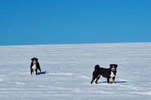 Ellie und Trixie im Schnee