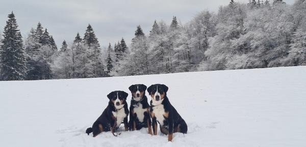 Winterwiese bei Ruhla