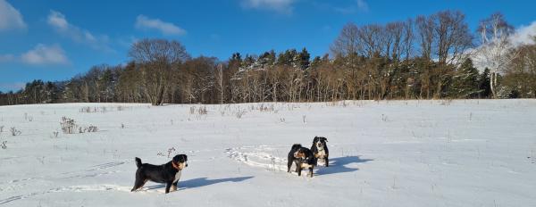 Schnee am Pfarrkopf