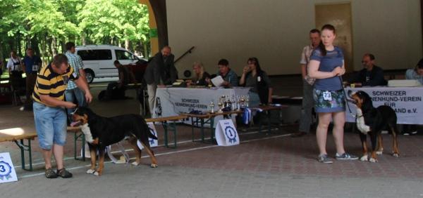 Championklasse Große Schweizer Sennenhunde