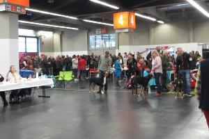 Sennehunde auf Ausstellung