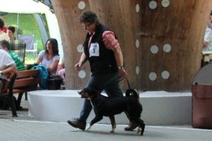 Appenzeller Junghund