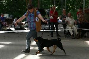 Appenzeller Sennenhunde vom Försterrain