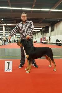 Großer Schweizer Sennenhund vom Försterrain