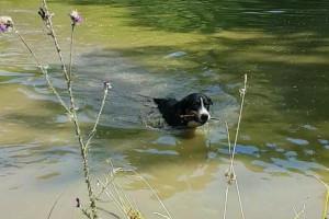 Apport aus dem Wasser