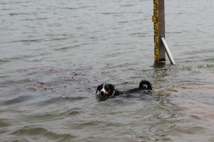 Ellie die Schwimmerin