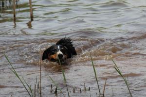 Trixie die Schwimmerin