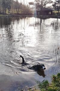 Ellie die Schwimmmaus