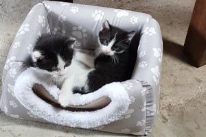 Katzenkinder