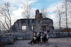 Ruine Krayenburg
