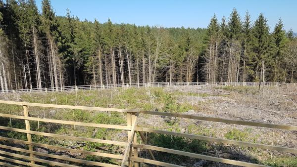 Wald neu angepflanzt