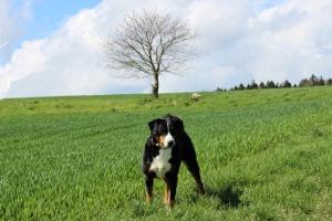 Ellie auf Brautschau