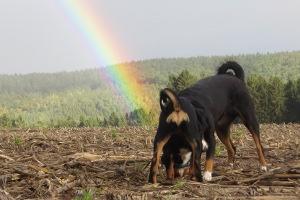 Am Fuße des Regenbogens...
