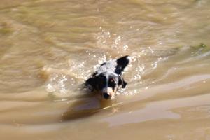 Appenzeller erstes Schwimmen