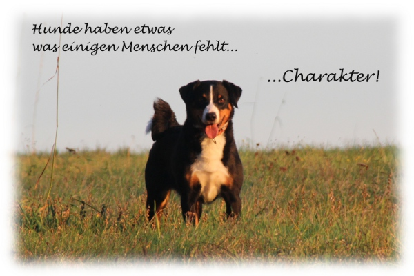 Hunde haben Charakter