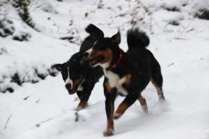 Ellie und Trixie