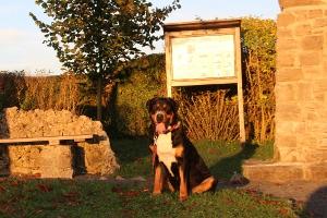 Oktoberspaziergang der Försterrainhunde