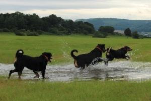 Juli und Hochwasser auf den Werrawiesen
