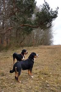 Cara und Fjella beim Geburtstagsspaziergang