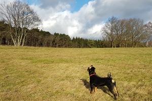 Sennenhunde im Januar