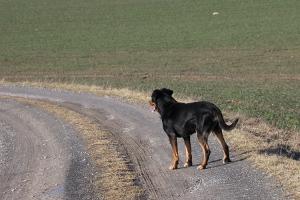 Bruno zu Besuch