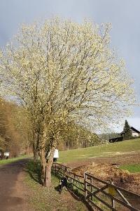 Aprilwetter im März