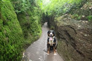 Arvo auf Wanderung um die Wartburg