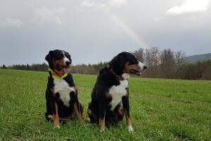 Ellie Trixie und der Regenbogen :-)