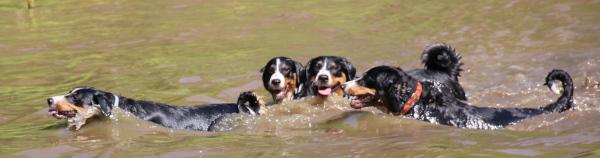 schwimmendes Quartett