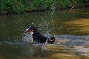 Jero schwimmt