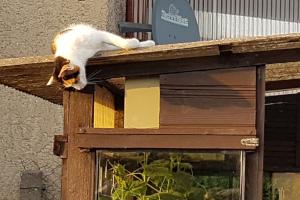 Katzenruhe