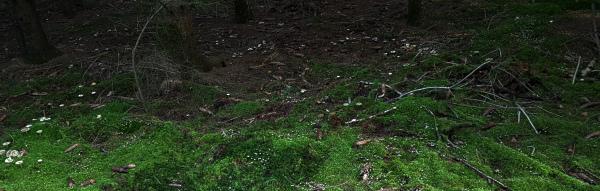 Pilze überall