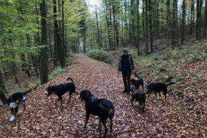 Sennenhundewanderung