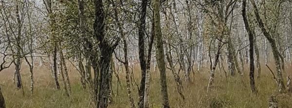 Kaltenhofer Moor
