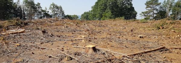 Dürreschäden im Tiefenort Wald