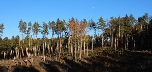 Waldschäden um Tiefenort herum