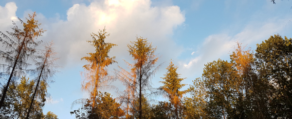 Der Wald stirbt...
